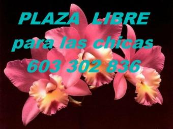 plaza libre para las chicas ..barrio salamanca!!! URGENTEEE